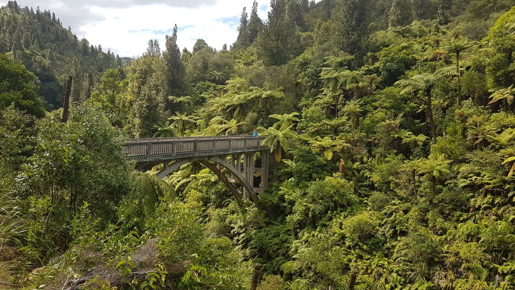 Whanganui River Journey 5