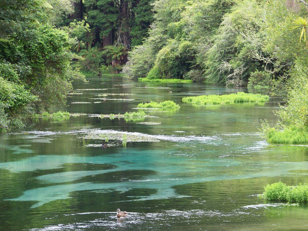 Rotorua Stream